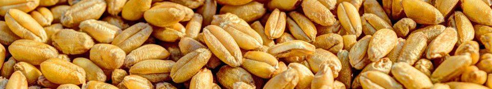 Биоактивное питание для сыроедения